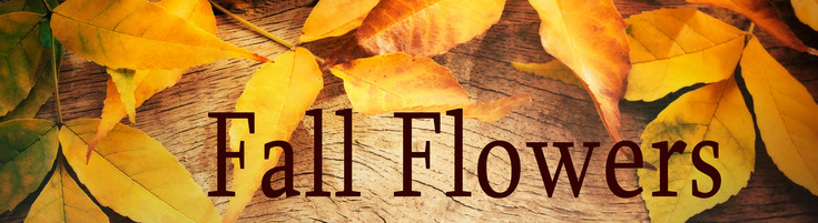 Fall Flowers - by your local Rochester NY florist.